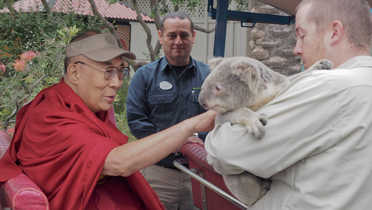 His Holiness the Dalai Lama petting an Australian koala bear during his visit to the San Diego Zoo in San Diego, CA, USA on June 18, 2017. Photo by Jeremy Russell/OHHDL