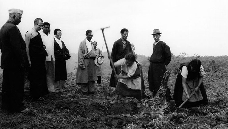 His Holiness the Dalai Lama watches women clearing-up tree roots for agricultural purposes in one of the Tibetan settlements in Soutn India in the 1960s.